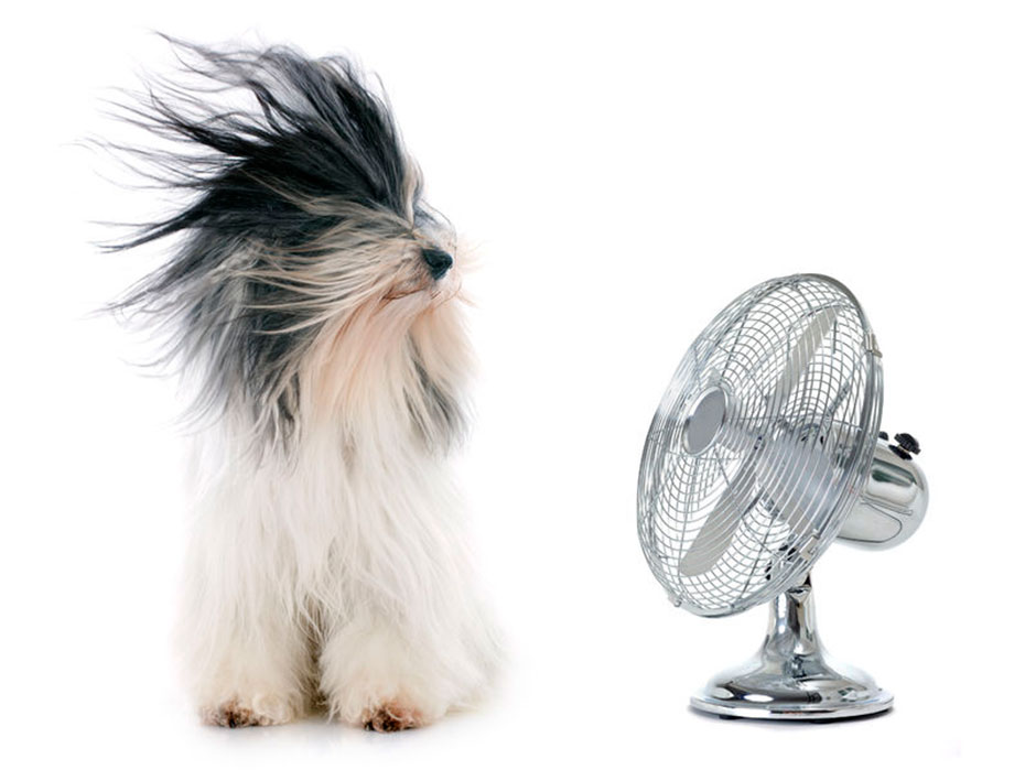 dog enjoying oscillating fan